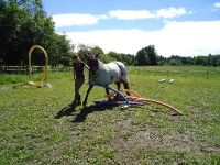 Freestyle Horse Agility - Gelting