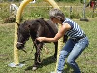 Freestyle Horse Agility - Gelting