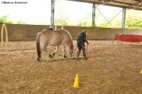 Freestyle Horse Agility - Sonnenhof