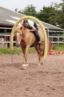 Freestyle Horse Agility_1