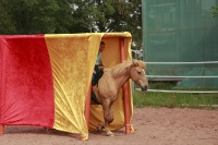Freestyle Horse Agility_4
