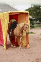 Freestyle Horse Agility_5