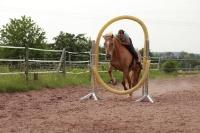 Freestyle Horse Agility_6