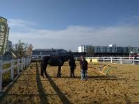 Krämer Pferdesport - Regensburg