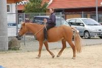 Krämer Pferdesport Vorführung