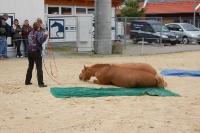 Pferdesport Vorführung